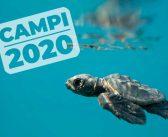 Campi di Formazione e Ricerca 2020 della ONLUS Caretta Calabria Conservation