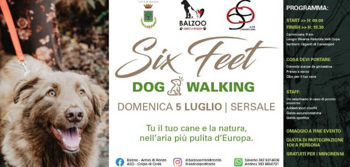SixFeet: dog walking a Sersale
