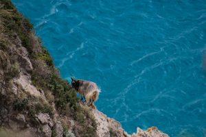 Faro Capovaticano Capra Mare Ivan Comi Cristalli Rubrica Calabria Contatto